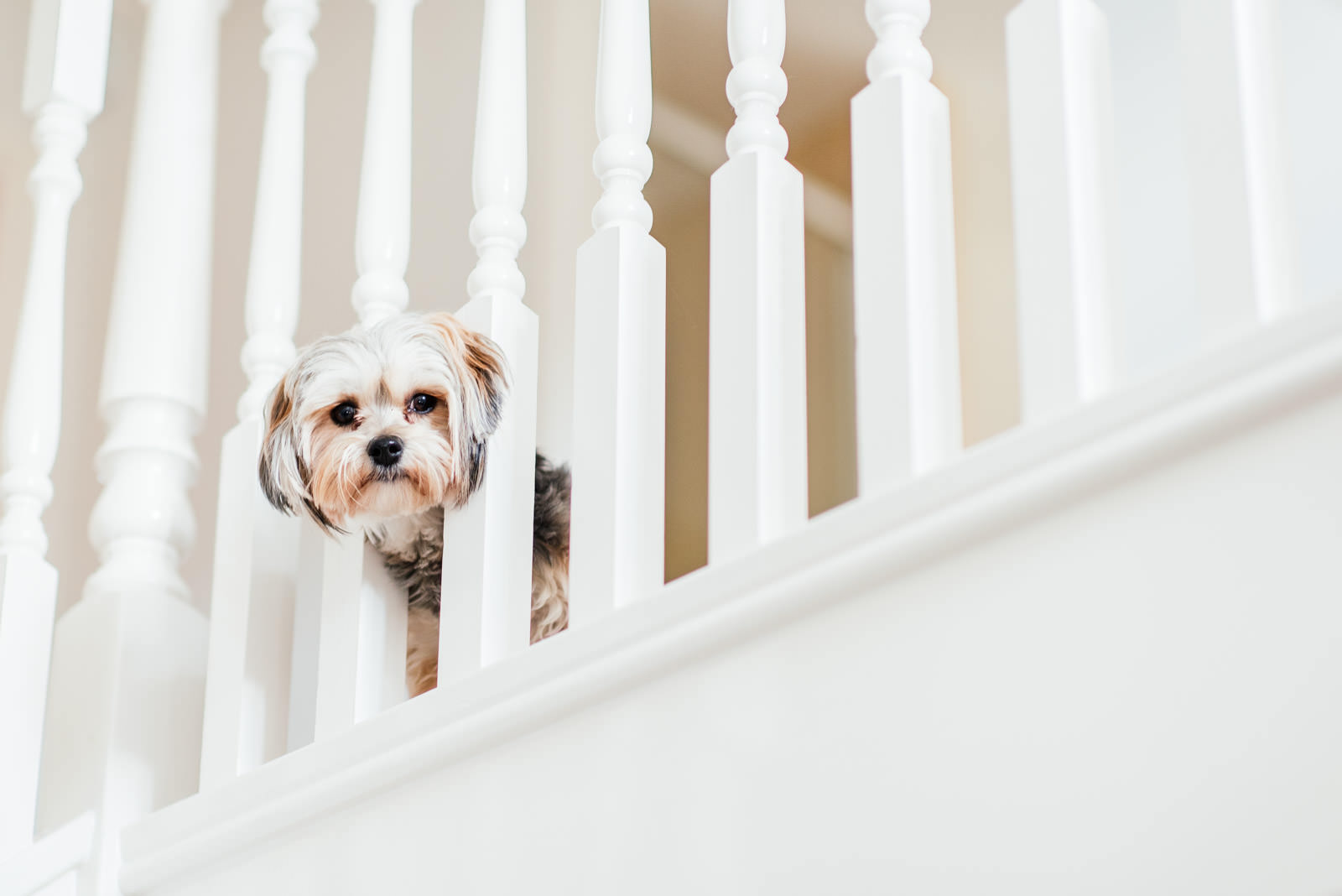 Onlooking Dog