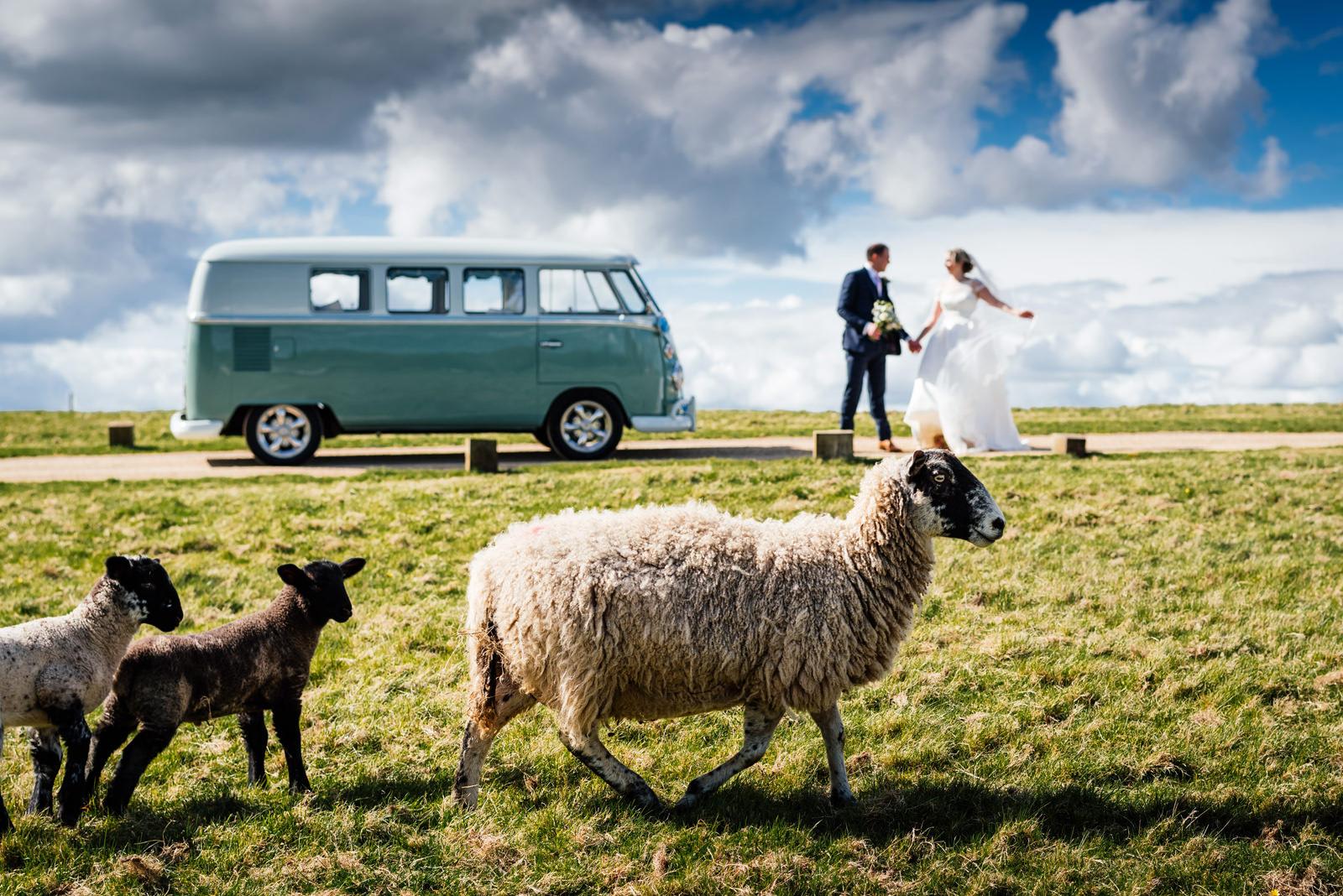 sheep at Dodford Manor