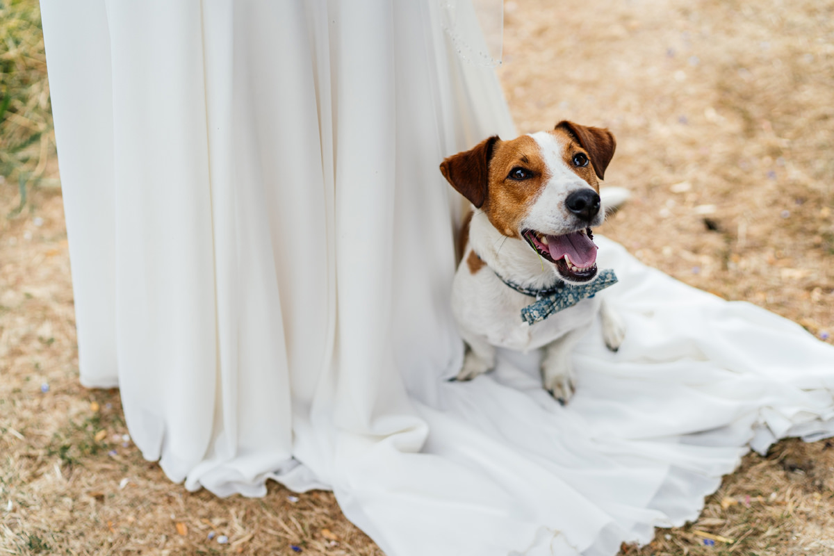 bride and grooms rehomed dog