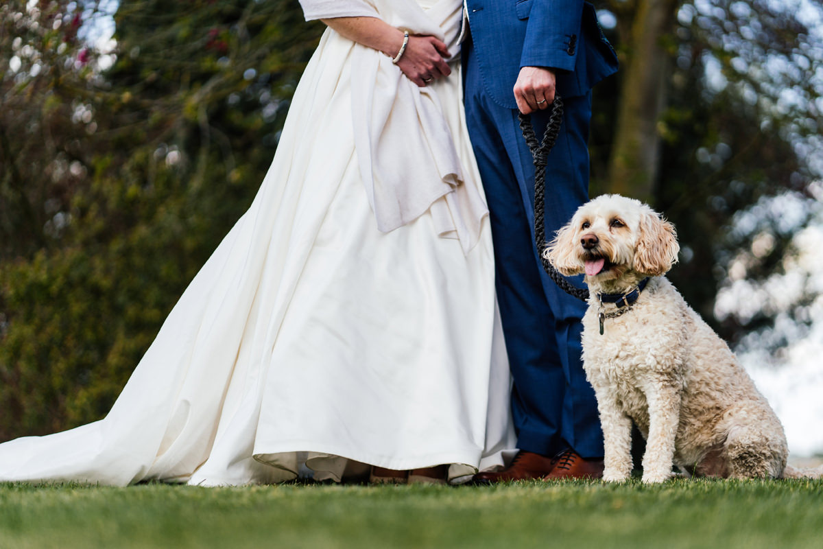 Pet portrait during bride and groom photos